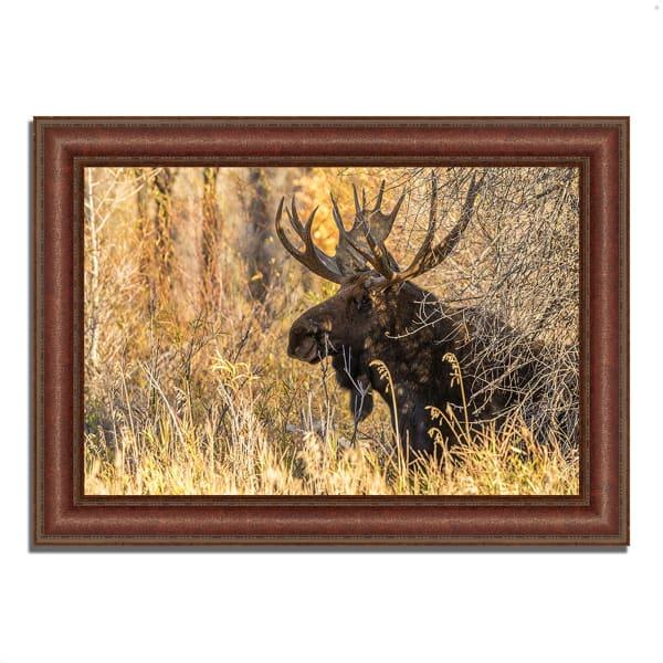 Framed Photograph Print 43 In. x 31 In. Black Antler Moose Multi Color
