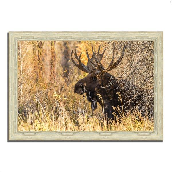 Framed Photograph Print 51 In. x 36 In. Black Antler Moose Multi Color