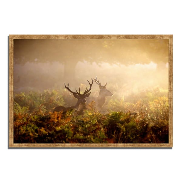 Framed Photograph Print 59 In. x 40 In. Two Stags at Dawn Multi Color