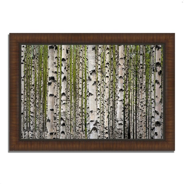 Framed Photograph Print 36 In. x 26 In. Spring Birch Multi Color