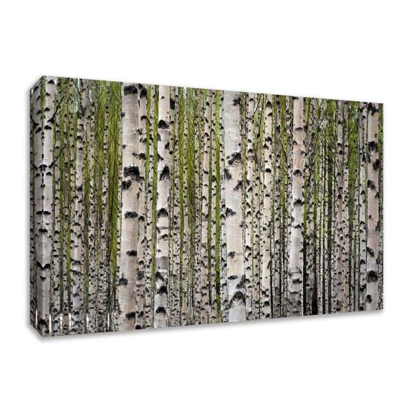 Fine Art Giclee Print on Gallery Wrap Canvas 57 In. x 38 In. Spring Birch Multi Color