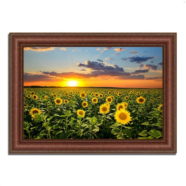 Framed Photograph Print 52 In. x 37 In. Sunflower Sunset Multi Color