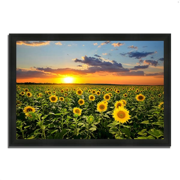 Framed Photograph Print 33 In. x 23 In. Sunflower Sunset Multi Color