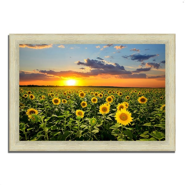 Framed Photograph Print 42 In. x 30 In. Sunflower Sunset Multi Color