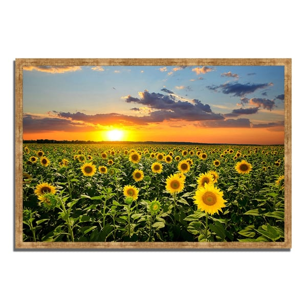Framed Photograph Print 32 In. x 22 In. Sunflower Sunset Multi Color