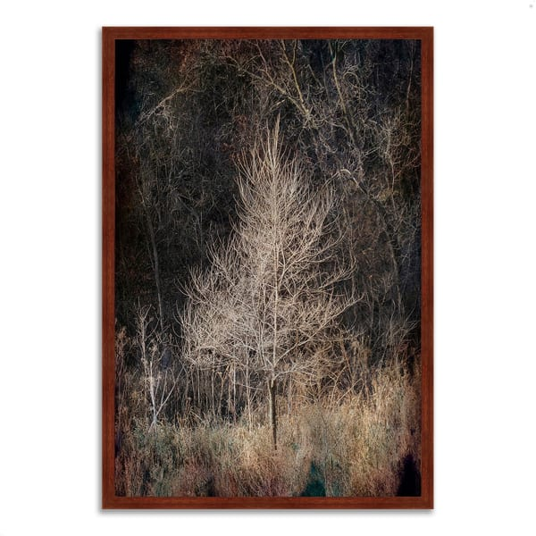 Framed Photograph Print 26 In. x 38 In. Illumination Multi Color