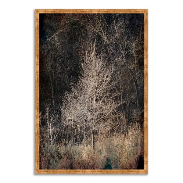 Framed Photograph Print 32 In. x 47 In. Illumination Multi Color