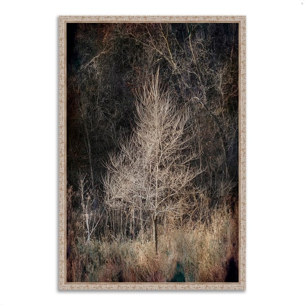 Fine Art Giclee Print on Gallery Wrap Canvas 32 In. x 47 In. Illumination Multi Color
