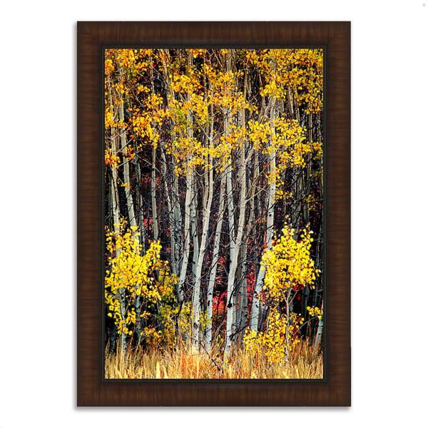 Framed Photograph Print 26 In. x 36 In. In The Aspens Multi Color