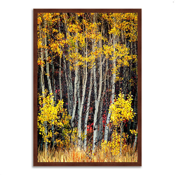 Framed Photograph Print 26 In. x 38 In. In The Aspens Multi Color