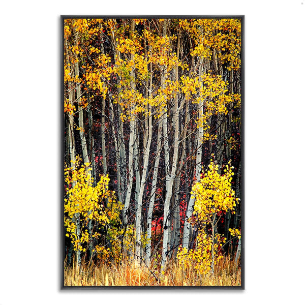 Fine Art Giclee Print on Gallery Wrap Canvas 22 In. x 32 In. In The Aspens Multi Color