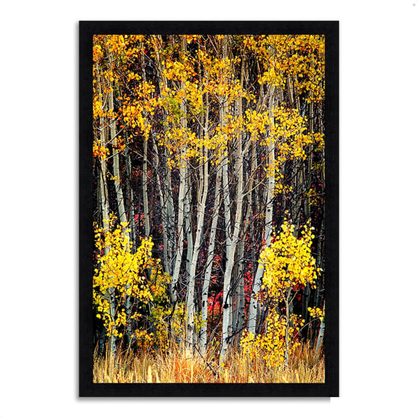 Framed Photograph Print 33 In. x 46 In. In The Aspens Multi Color