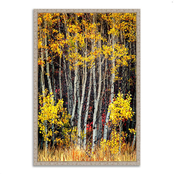 Fine Art Giclee Print on Gallery Wrap Canvas 26 In. x 38 In. In The Aspens Multi Color