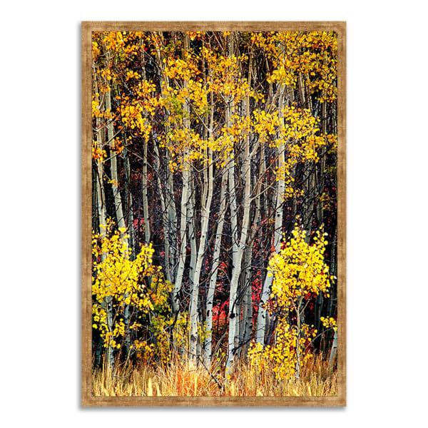 Framed Photograph Print 40 In. x 59 In. In The Aspens Multi Color