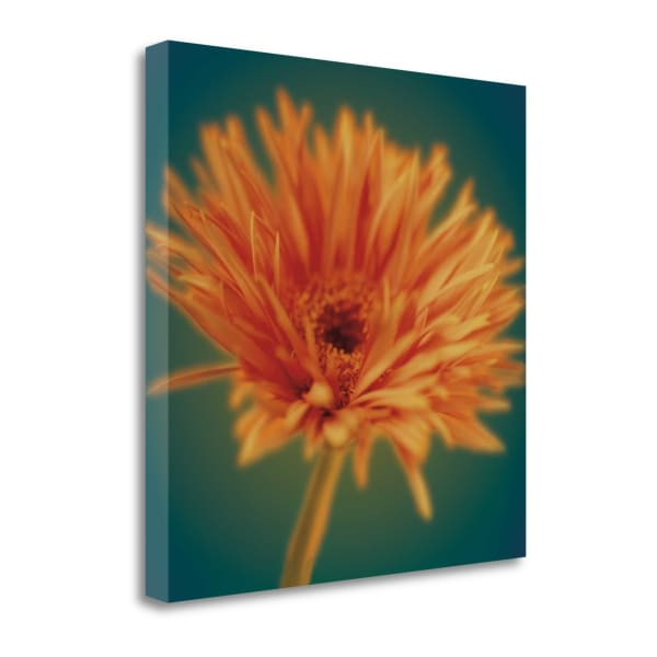 Chrysanthemum On Turquoise By Jane-Ann Butler 22 x 22 Gallery Wrap Canvas