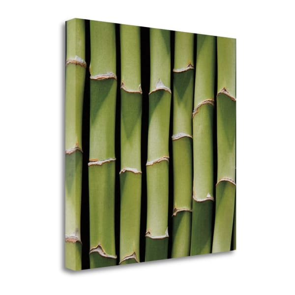Bamboo Lengths By Jeff 22 x 22 Gallery Wrap Canvas