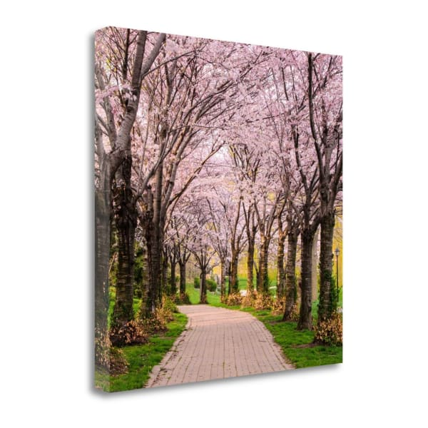 Cherry Blossom Trail By Chuck Burdick Wrapped Canvas Wall Art
