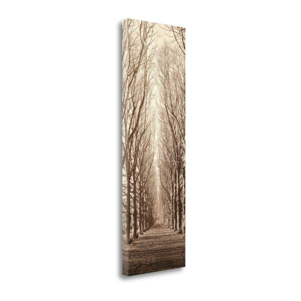 Poplar Trees By Alan Blaustein Wrapped Canvas Wall Art