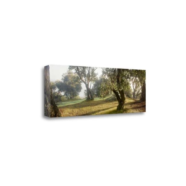Oak Tree - 71 By Alan Blaustein Wrapped Canvas Wall Art