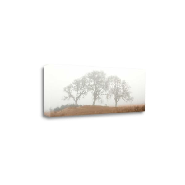 Oak Tree - 15 By Alan Blaustein Wrapped Canvas Wall Art