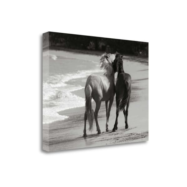 Young Mustangs On Beach By Traer Scott Wrapped Canvas Wall Art