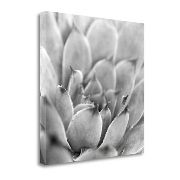 Garden Succulent I By Laura Marshall Wrapped Canvas Wall Art