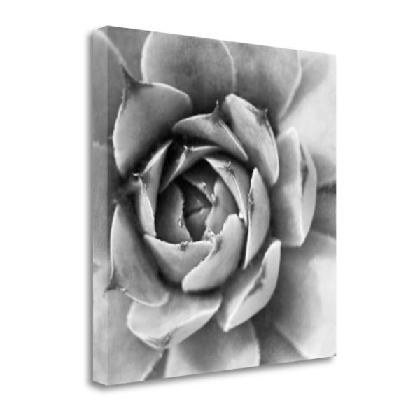 Garden Succulent II By Laura Marshall Wrapped Canvas Wall Art