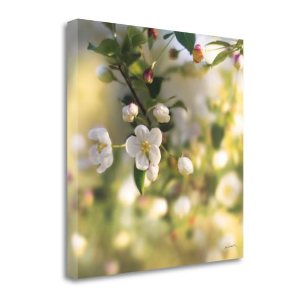 Blush Blossoms I By Sue Schlabach Wrapped Canvas Wall Art