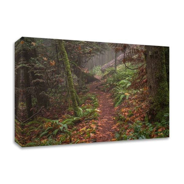 Forest Stroll by Tim Oldford Wrapped Canvas Wall Art