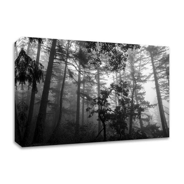 Misty Forest by Tim Oldford Wrapped Canvas Wall Art