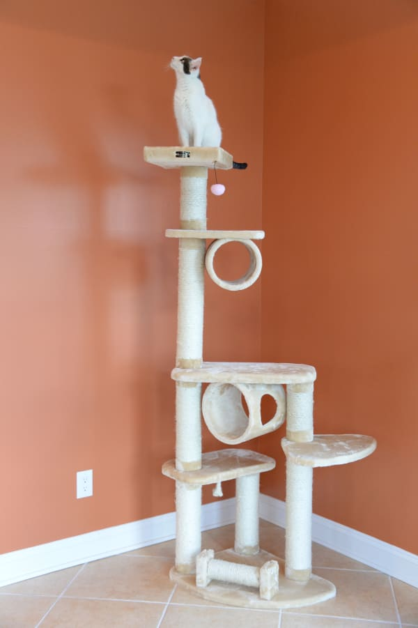 H Press wood Cat Tree With Cured Sisal Posts for Scratching
