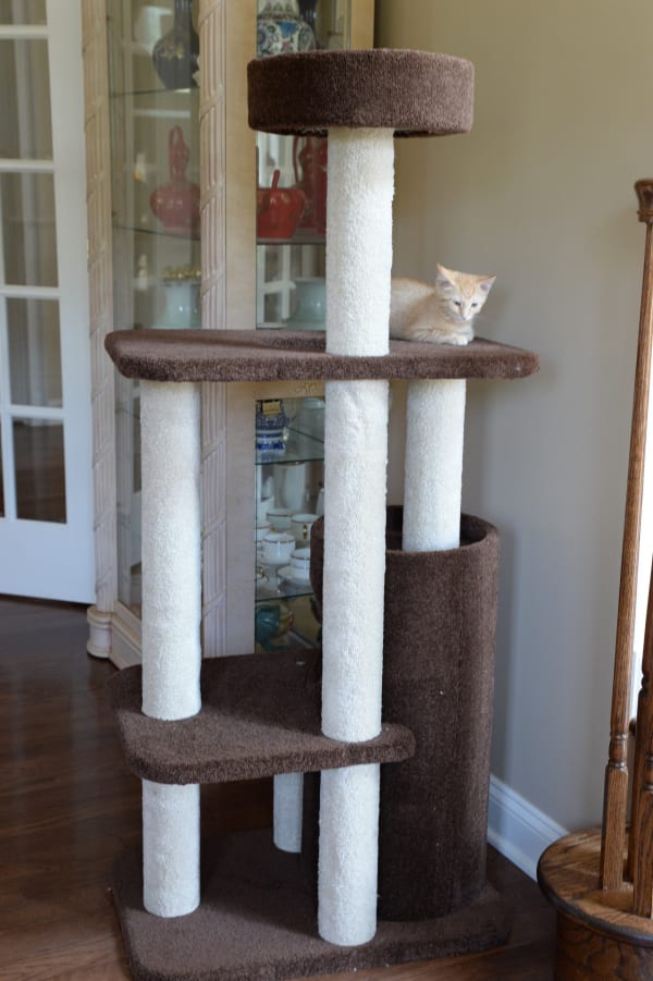 Brown 3-Level Carpeted Cat Tree Condo Kitten PlayHouse Climber Activity Centre