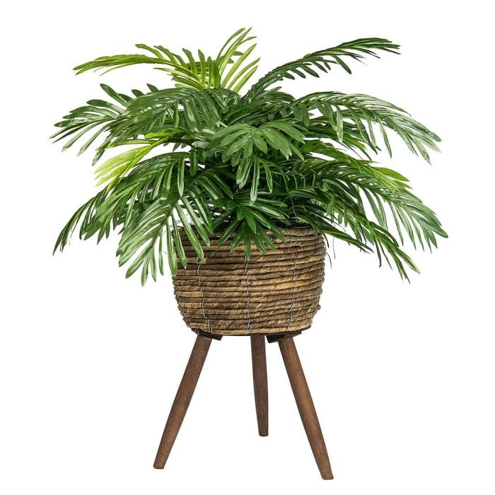 Phoenix Palm in Deco Basket Stand