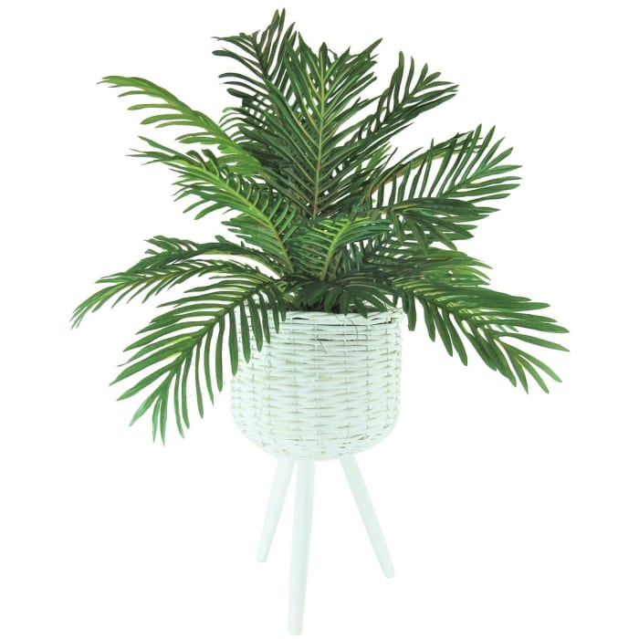 Phoenix Palm in White Basket Stand