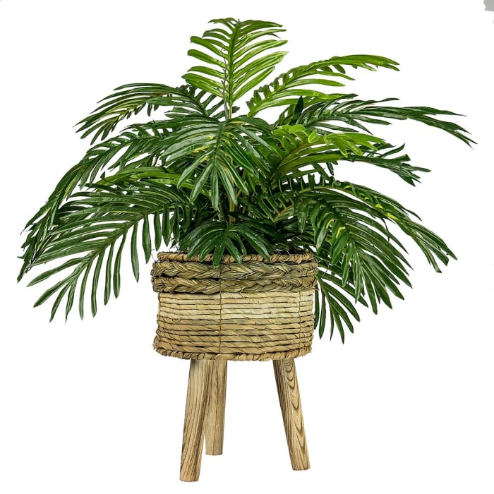 Palm in Tri-Color Basket Stand
