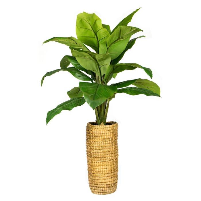 Spath Plant in Cylinder Basket