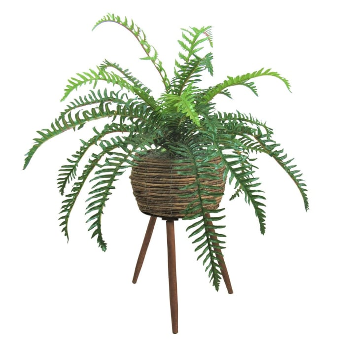 Fern Plant in Basket Stand