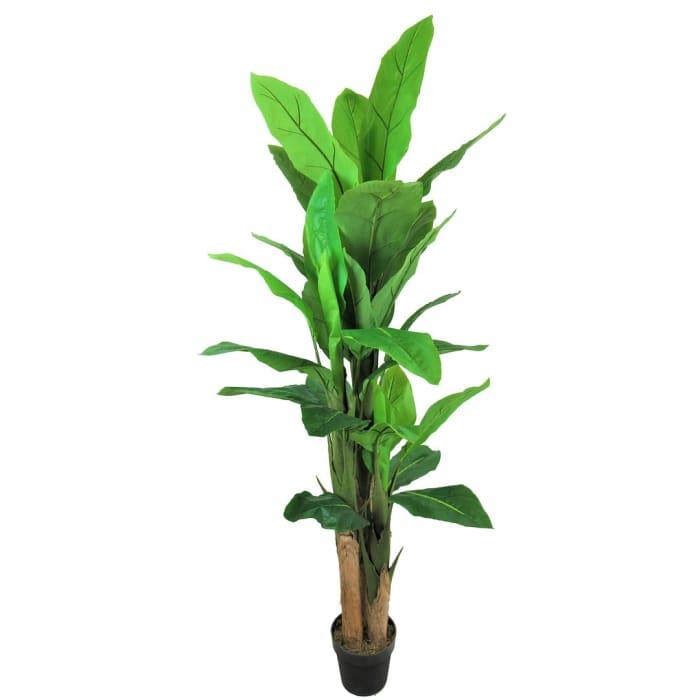 Growers Banana Leaf Tree in Pot Liner