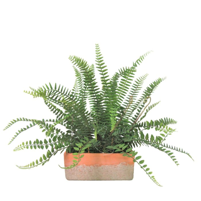 Forest Fern in Deco Cement Ledge