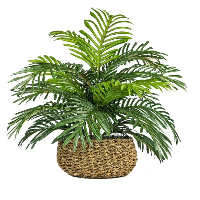 Palm in Low Basket Planter