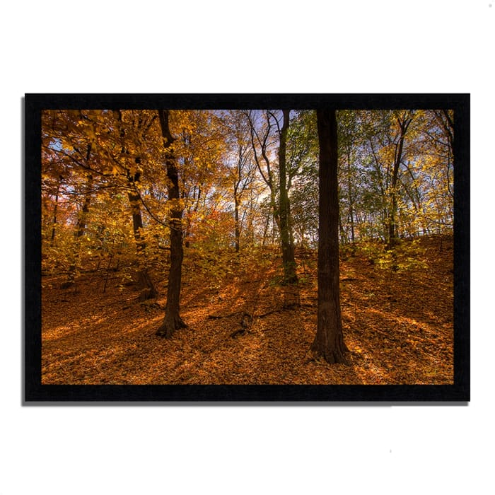Framed Photograph Print 39 In. x 27 In. Sun Spackled Wood  Multi Color