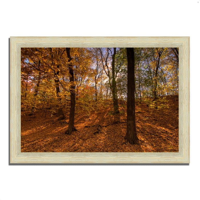 Framed Photograph Print 42 In. x 30 In. Sun Spackled Wood  Multi Color
