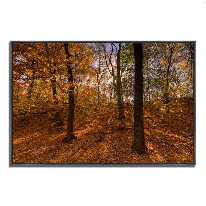 Fine Art Giclee Print on Gallery Wrap Canvas 47 In. x 32 In. Sun Spackled Wood  Multi Color