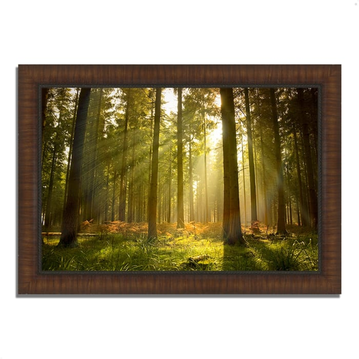 Framed Photograph Print 36 In. x 26 In. Forest at Dusk Multi Color