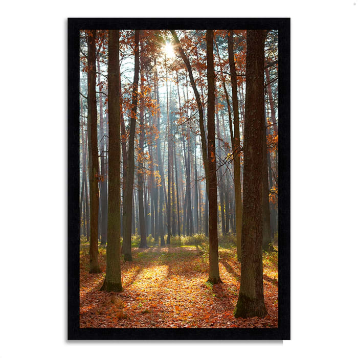 Framed Photograph Print 41 In. x 60 In. Autumn Forest Multi Color