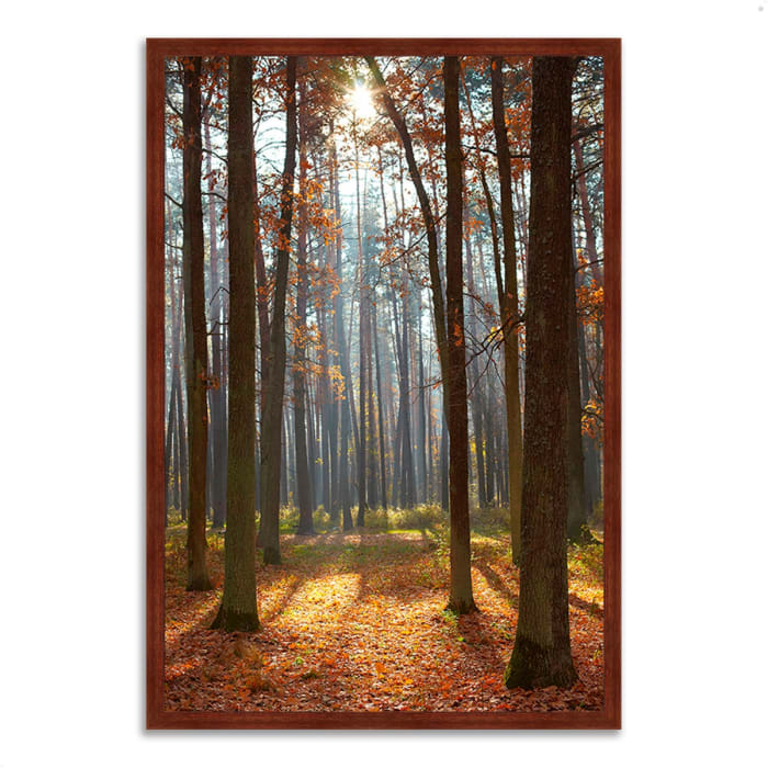 Framed Photograph Print 40 In. x 59 In. Autumn Forest Multi Color