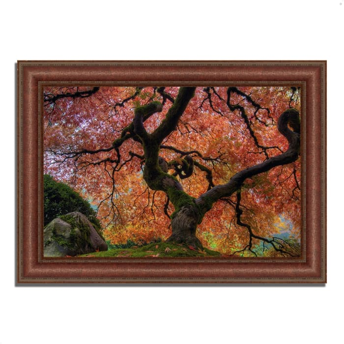 Framed Photograph Print 27 In. x 37 In. Japanese Maple in Autumn Multi Color