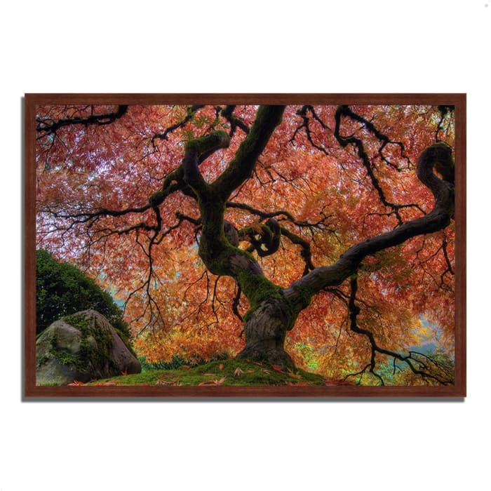 Framed Photograph Print 26 In. x 38 In. Japanese Maple in Autumn Multi Color