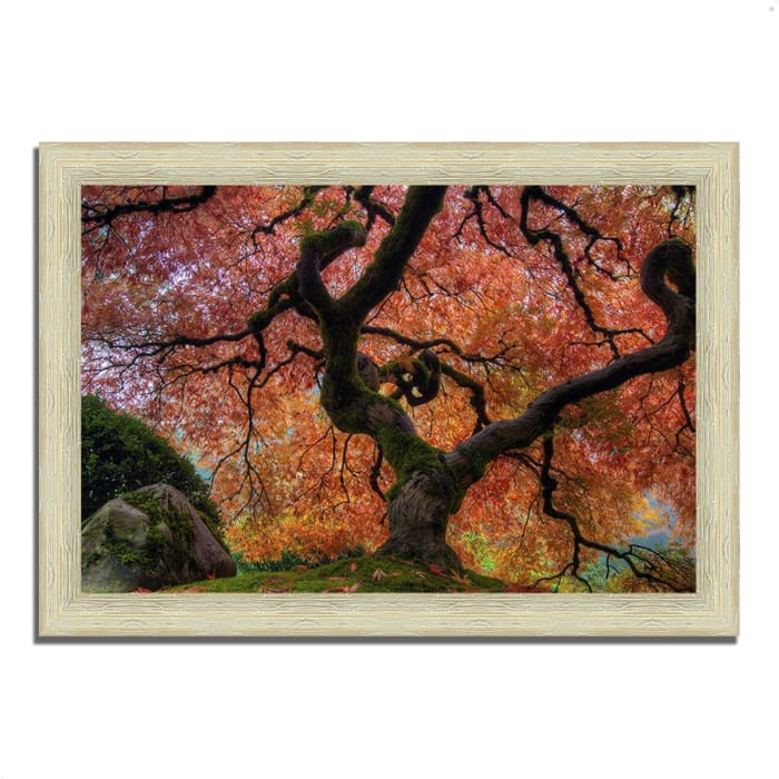 Framed Photograph Print 36 In. x 51 In. Japanese Maple in Autumn Multi Color