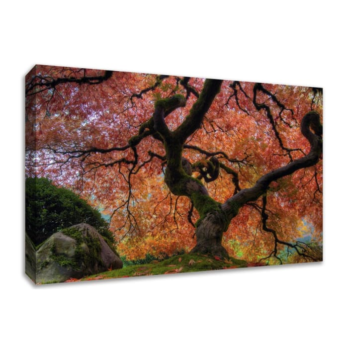 Fine Art Giclee Print on Gallery Wrap Canvas 30 In. x 45 In. Japanese Maple in Autumn Multi Color